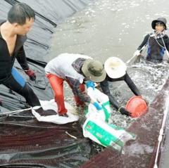 Hướng đi bền vững cho nuôi tôm trên cát ở Hà Tĩnh