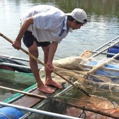 Quảng Điền: Gần 5 tấn cá lồng bị chết