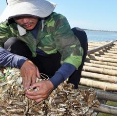 Hàng trăm tấn thủy sản chết dần, người nuôi điêu đứng