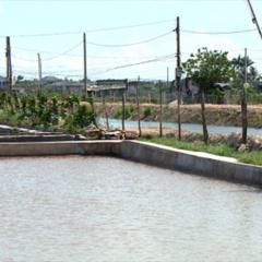 Mô hình nuôi tôm an toàn tại Thái Bình