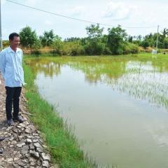 Bền vững sản xuất lúa - tôm