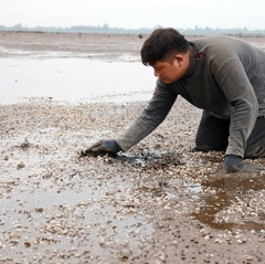 263 tấn ngao chết ở Hà Tĩnh không phải do dịch bệnh