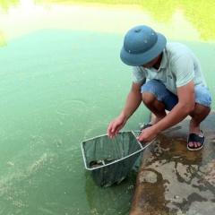 Thanh niên khởi nghiệp thành công từ nuôi cá giống