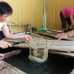HTX kết hợp nuôi cá lồng với du lịch lòng hồ