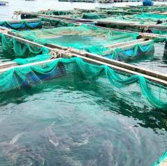 Rủi ro khi nuôi thủy sản lồng bè trong mùa mưa