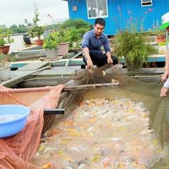 Quy hoạch vùng nuôi cá bè trên hồ Trị An