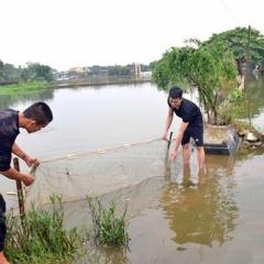 Nghệ An: Hơn 3 tỷ đồng của người nuôi cá trôi theo lũ
