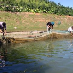 Quỳnh Nhai đảm bảo nuôi trồng thủy sản mùa mưa lũ
