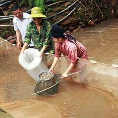 Làm giàu nhờ mô hình nuôi cá giống ở Chiềng Đông