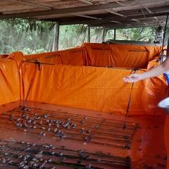 Làm giàu từ nuôi ếch trong chuồng lợn bỏ hoang