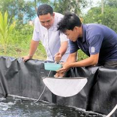 Cà Mau: Đẩy mạnh ứng dụng kỹ thuật nuôi tôm 2 giai đoạn