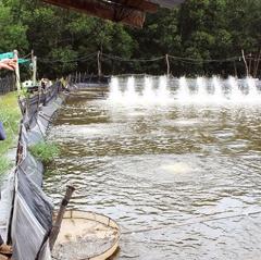 Đồng Nai: Thu bạc tỷ từ nuôi thủy sản nước lợ