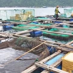 Mật độ vi khuẩn gây bệnh trong vùng nuôi thủy sản gia tăng