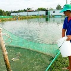 TP. HCM tập trung sản xuất giống thủy sản