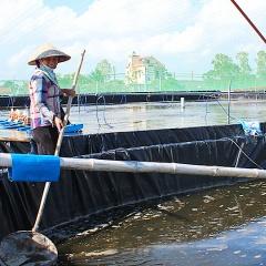Nam Định: Đổi thay nhờ quy hoạch nuôi thuỷ sản tập trung