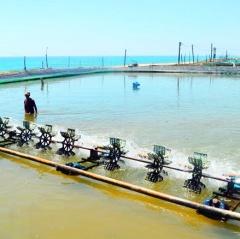 Quảng Ngãi: Quan trắc môi trường nuôi thủy sản còn hạn chế