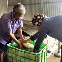 Trang trại cá giống ở Hải Dương có doanh thu 7 - 8 tỷ đồng/năm