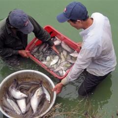 Vựa cá trên thung lũng sông La Ngà