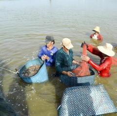 Nâng cao giá trị các mặt hàng thủy sản