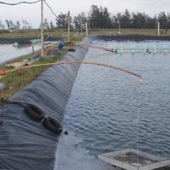 Bệnh vi bào tử trùng trên tôm nuôi xuất hiện ở Hà Tĩnh