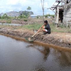 Kiên Giang: Cá biển và cá nuôi lồng bè chết hàng loạt