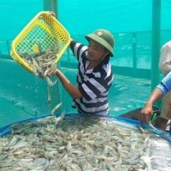 Bạc Liêu: Phấn đấu xuất khẩu thủy sản đạt 1 tỷ USD