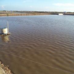 Lưu ý về môi trường trong ao nuôi tôm nước lợ