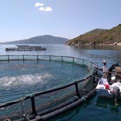 Để nuôi biển công nghiệp hiệu quả phải giữ cho biển khỏe, sạch