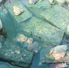 Nghệ An: Mô hình nuôi ếch kết hợp cá thu về trăm triệu