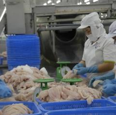 Cá tra trông chờ thị trường Trung Quốc