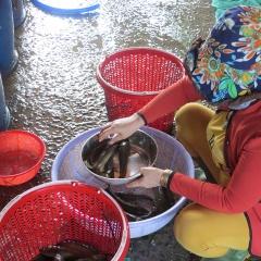 Đồng Tháp: Giữa mùa nước nổi ra chợ tìm mỏi mắt mới ra mớ cá đồng