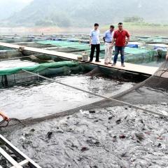 Tuyên Quang: Hướng đến làm giàu từ cá đặc sản
