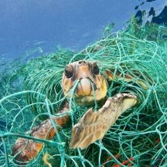 """Ngành thủy sản đối diện với cảnh báo """"rác sẽ nhiều hơn cá"""""""
