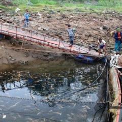 Nước sông Đà xuống thấp, hàng chục lồng cá mắc cạn