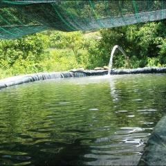 Nuôi cá tầm ở vùng cao A Lưới