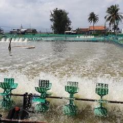 Nuôi tôm tự phát: Môi trường ô nhiễm, nước ngầm cạn kiệt