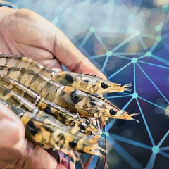 Mỹ thí điểm truy xuất nguồn gốc tôm nhập khẩu bằng công nghệ Blockchain