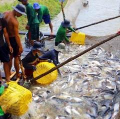 Từng ao nuôi cá tra được mã hóa như thế nào?