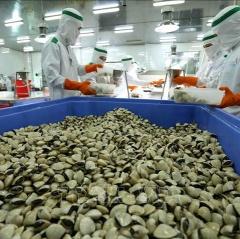 Trung Quốc mở cửa thị trường với nghêu Việt Nam
