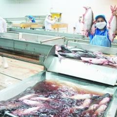 Ấn Độ đẩy mạnh nuôi cá tra: Việt Nam khó càng thêm khó