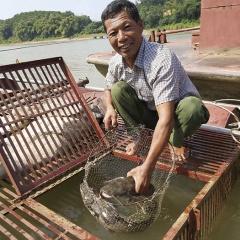 Nuôi cá chiên thu hàng trăm triệu mỗi năm