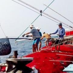 Các quy định bắt buộc đối với tàu cá có hiệu lực từ năm 2020