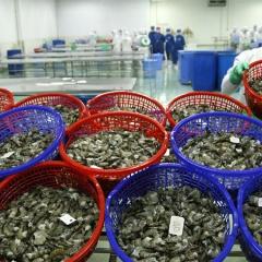 Lời giải thích cho bước lùi của xuất khẩu thủy sản