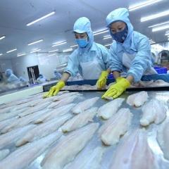 Xuất khẩu cá tra vào thị trường châu Á: Trung Quốc, ASEAN có dấu hiệu phục hồi