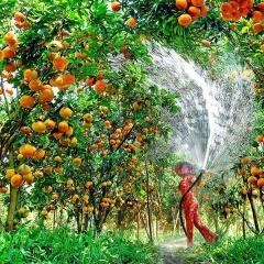 Biện pháp kỹ thuật trong canh tác cây ăn quả trong đợt hạn mặn mùa khô