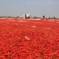 Thị trường nông sản xuất khẩu có diễn biến khả quan hơn