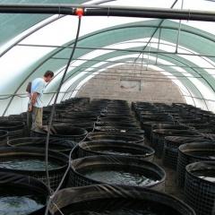 Qatar mở trang trại nuôi tôm siêu thâm canh đầu tiên
