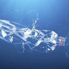 Điều gì xảy ra khi cá ăn phải hạt vi nhựa?