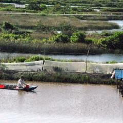 Mưa nắng sụt sùi, hàng chục ngàn ha tôm nuôi bị thiệt hại nặng