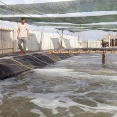 Bến Tre khuyến khích chuyển đổi diện tích muối sang nuôi tôm